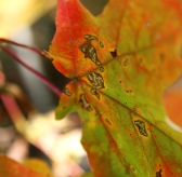 leaf small